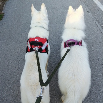 Bungee Leash Divider