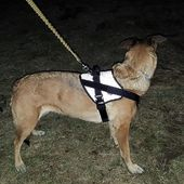 Reflective Comfort Harness! Not only comfortable to walk, work and run in but also extra safe in the dark🤩🐾 #dogharness #miak9 #dogaccessories #activedoggear #workingdog #servicedog #servicedogsofinstagram