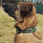 """I'm bad-ass and is shows! 😎Custom pattern 1.5""""/40mm flat collar. Currently only available on request#miak9 #dogcollar #doggear #activedog #activedoggear #workingdog #belgianshepherd #belgianmalinois #gsd"""