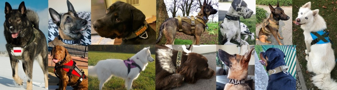 customized products on canine customers